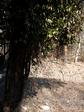 2007.02.02 teikakazura 004.jpg