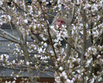 2007.03.30 nihonzaru 001.jpg