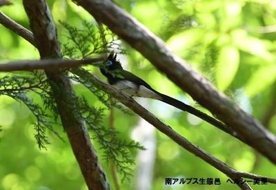 ツアー参加者中川様から、使用可 (37).JPG