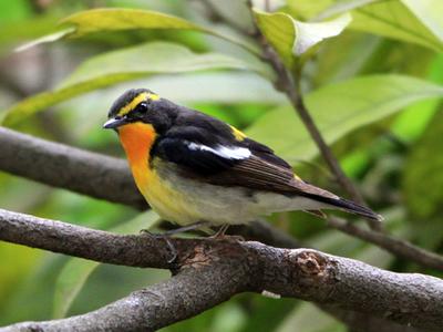 野鳥2.jpg