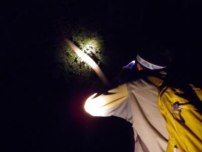 夜の観察.jpg